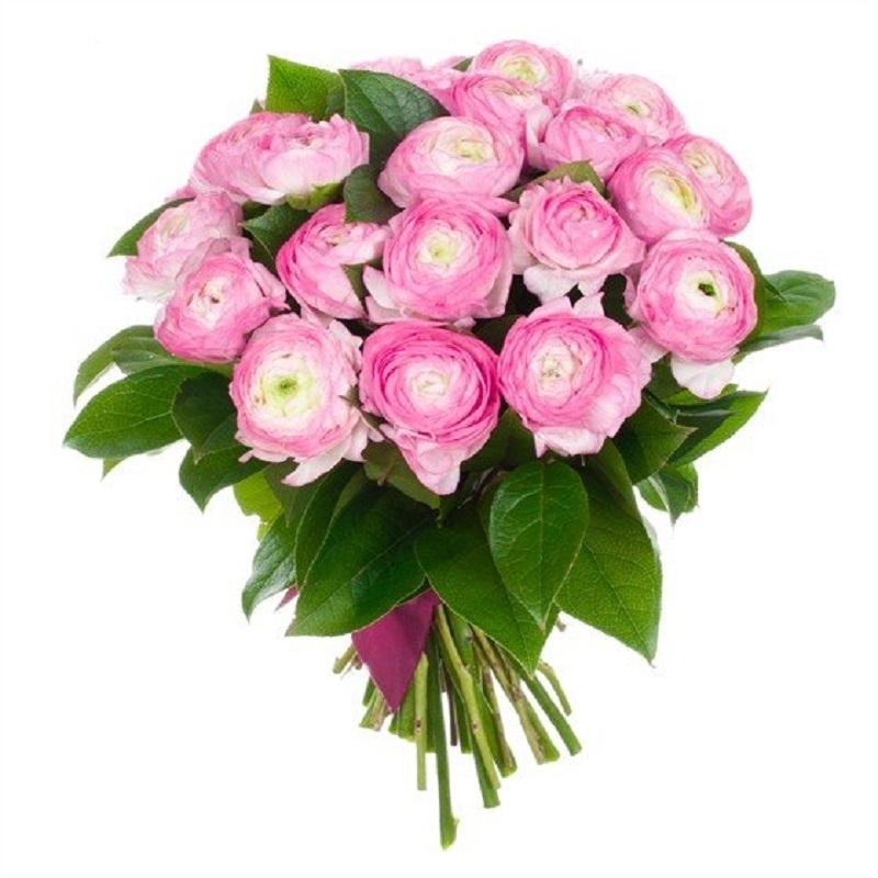 Букет из розового ранункулюс купить, цветов красноярске