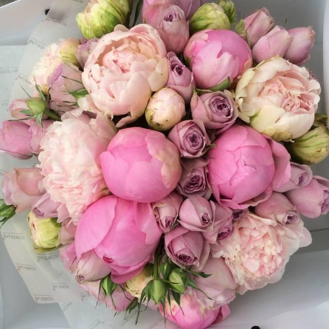 Обои на рабочий стол пионовые розы 2
